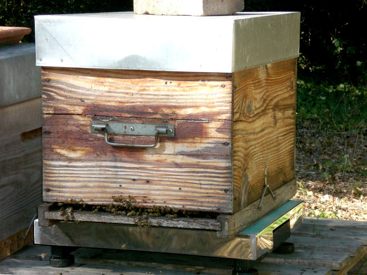 ruche-beezbee-hivernale