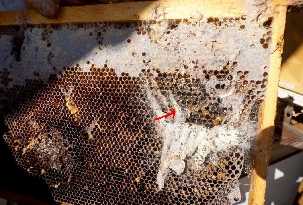 froid abeille en hiver