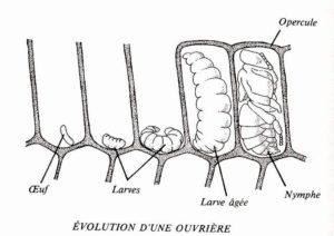 evolutionouvriere