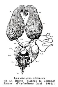 organereine