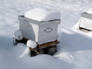 survie_hivernale_1
