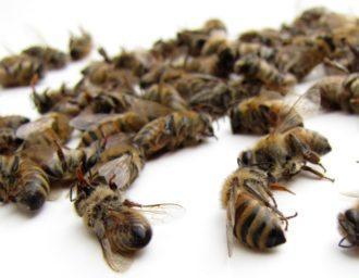 L 39 abeille du forez le site des apiculteurs du forez - Qu est ce qui fait fuir les abeilles ...
